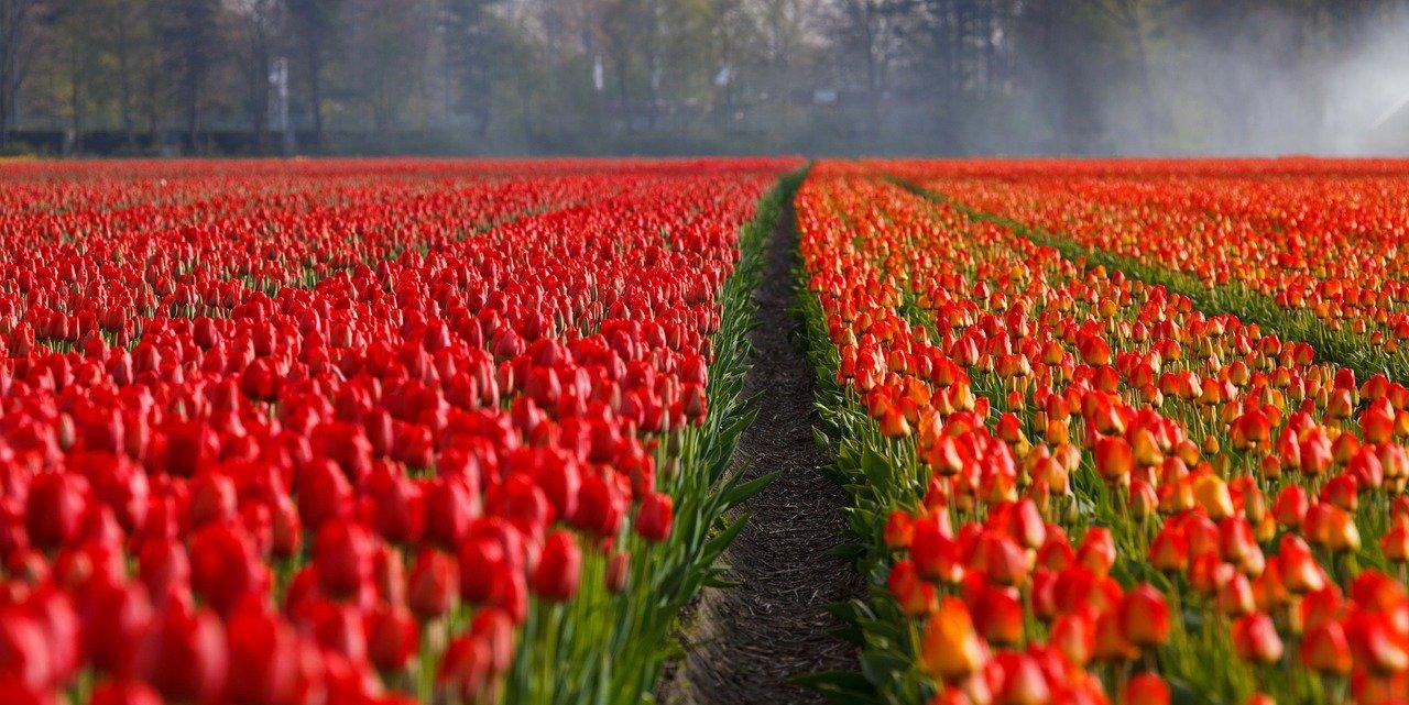 Jakie ubezpieczenie do Holandii?